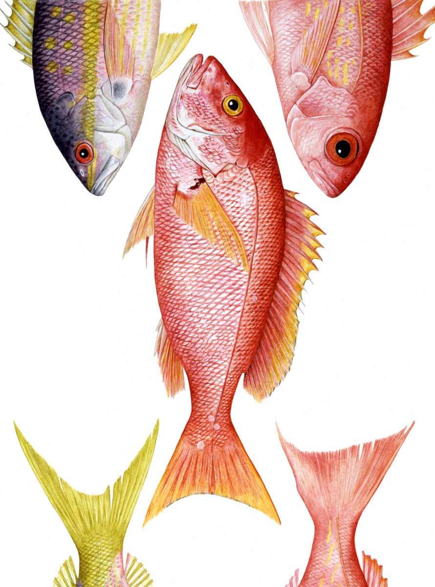 Seafood - Charlotte Knox